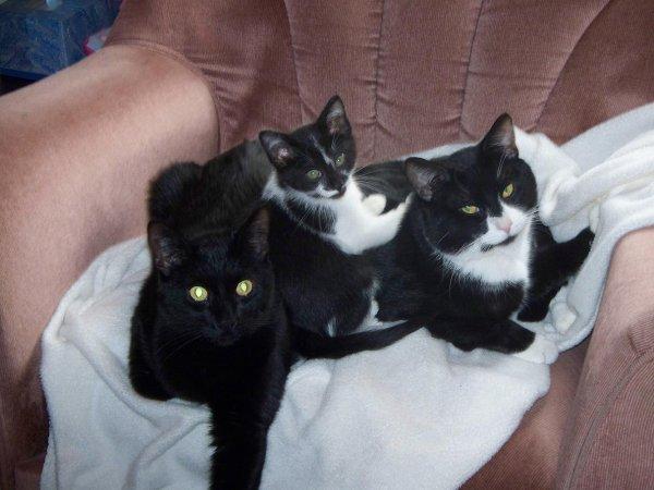 "The three ""darlings"""