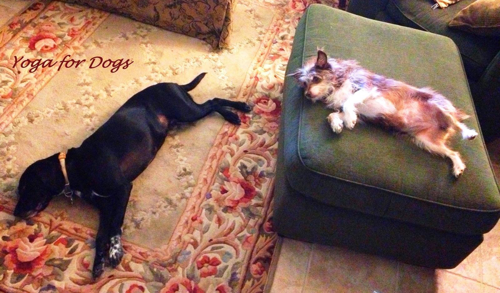 Yoga for Dogs.JPG