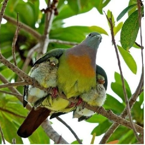 Mother bird's protection