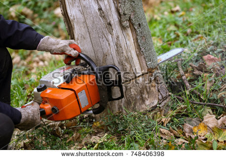 stock-photo-cutting-tree-with-a-chainsaw-748406398.jpg