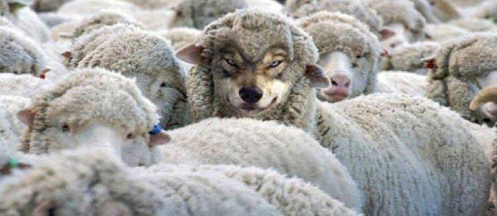 Wolf in sheeps clothing.jpg